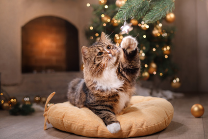 Do's and Don'ts for pets at Christmas
